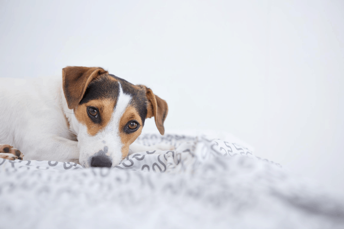 Finding The Best Carpet Shampoo For Pet Urine Used By
